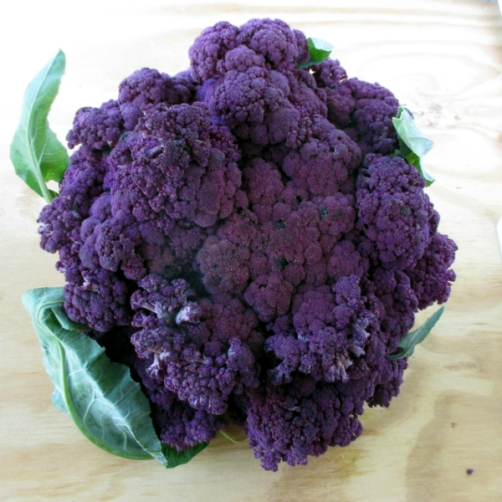 Purple-Cauliflower