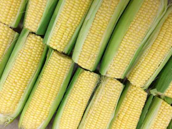 mcclendons-select-corn