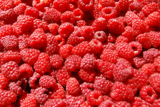 Raspberries-raspberries-35243775-3872-2592.jpg