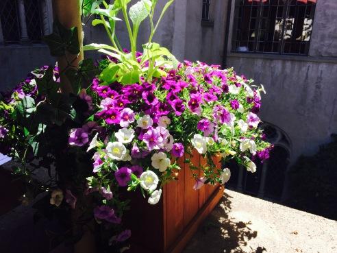 Flowers on Terrace.jpg